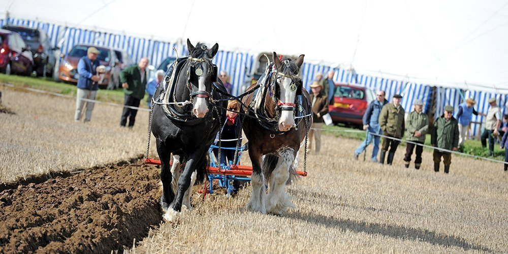 Horse Ploughing at the Flintham Show